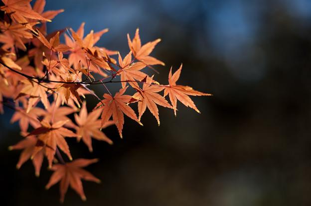 【六義園の紅葉】2_5
