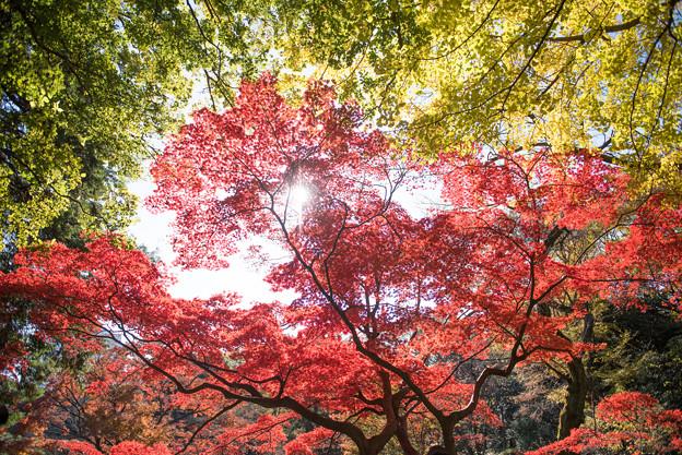 【六義園の紅葉】3_5