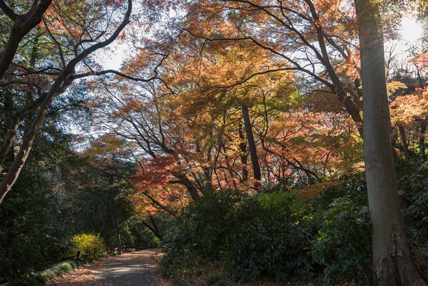 新宿御苑【モミジ山の紅葉】1_3