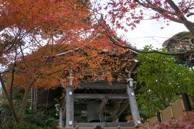 鎌倉【長谷寺の紅葉】2