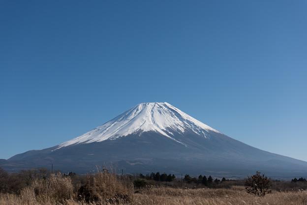 富士山【朝霧高原からの眺め】4