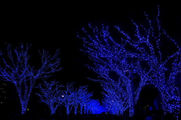 Photos: 青の洞窟_SHIBUYA【代々木公園ケヤキ並木】1