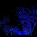 青の洞窟_SHIBUYA【代々木公園ケヤキ並木】1