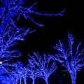 青の洞窟_SHIBUYA【代々木公園ケヤキ並木】3