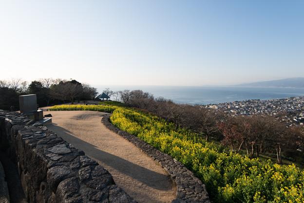 吾妻山公園【相模湾と菜の花】2