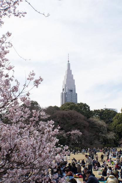 新宿御苑【桜とタワー】3