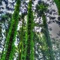 ジャックと豆の木