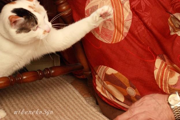 猫パンチごっこ1
