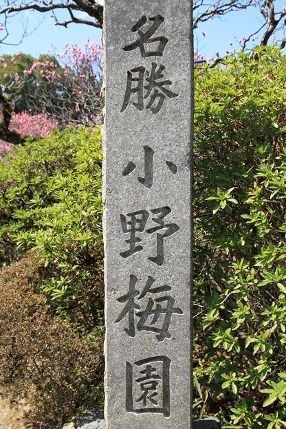 IMG_8260隨心院門跡・小野梅園