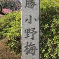 写真: IMG_8260隨心院門跡・小野梅園