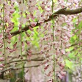 Photos: IMG_0115春日大社神苑萬葉植物園・新紅