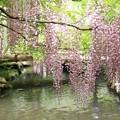 Photos: IMG_0120春日大社神苑萬葉植物園・新紅