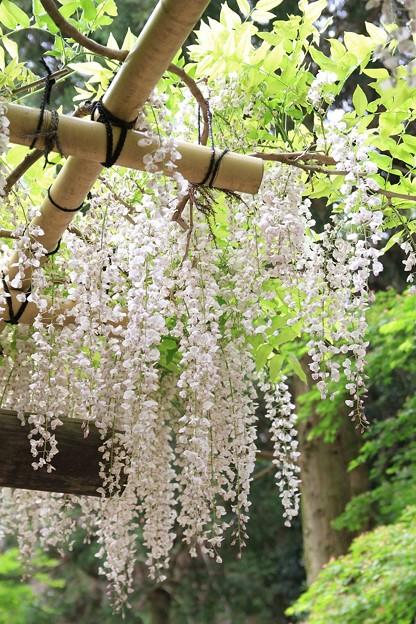 IMG_0128春日大社神苑萬葉植物園・口紅