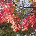 Photos: IMG_9670圓成寺・紅葉
