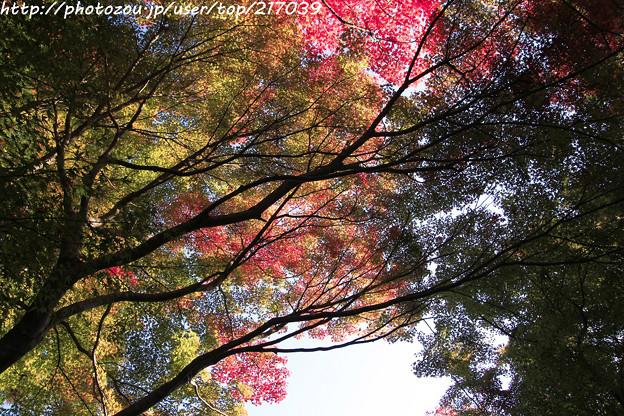 IMG_9689圓成寺・紅葉