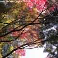 Photos: IMG_9689圓成寺・紅葉