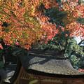 Photos: IMG_9718圓成寺・紅葉と鎮守社(春日堂・白山堂)(国宝)