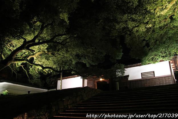 IMG_0335青蓮院門跡・長屋門と楠の木(天然記念物)
