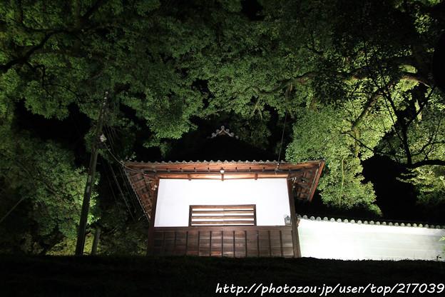 IMG_0339青蓮院門跡・長屋門と楠の木(天然記念物)