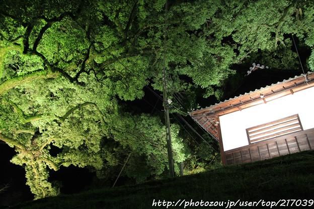 IMG_0341青蓮院門跡・長屋門と楠の木(天然記念物)
