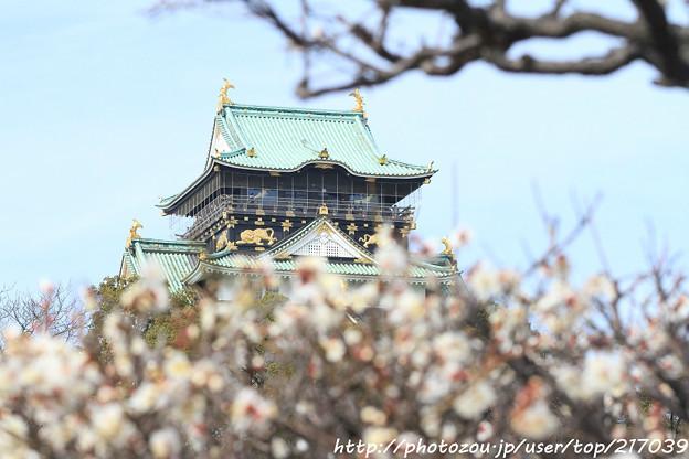 IMG_2038大阪城公園・梅林・大阪城天守閣と梅