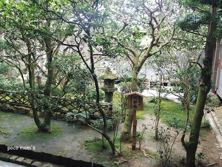 龍安寺方丈東庭 日本最古 侘助椿 2015年01月11日_P1110072