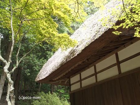 常楽寺 P8150107