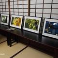 Photos: 瑞泉寺 イラストレーター中川学原画展 PA160750