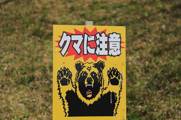 熊出没地帯