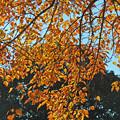 Photos: 花の木の紅葉4