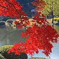 新宿御苑の秋景2