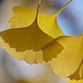 写真: 木の葉の影1