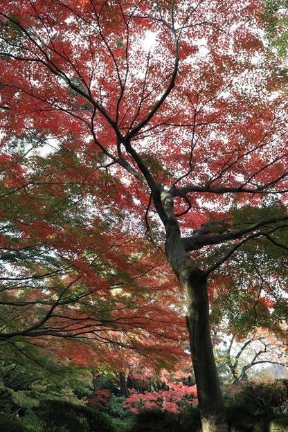旧古川庭園にて