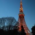東京タワー夜明け前
