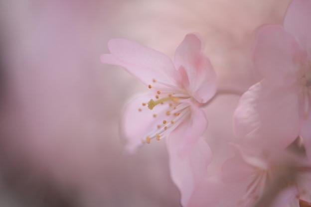 桃色の世界その3