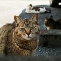 猫撮り散歩1629