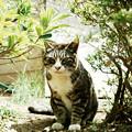 猫撮り散歩1699