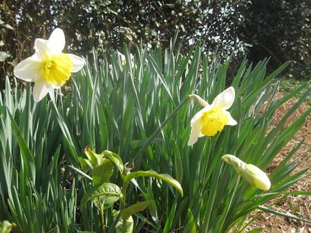 春の足音、お花もにこにこ。