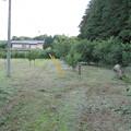 写真: 草刈り後