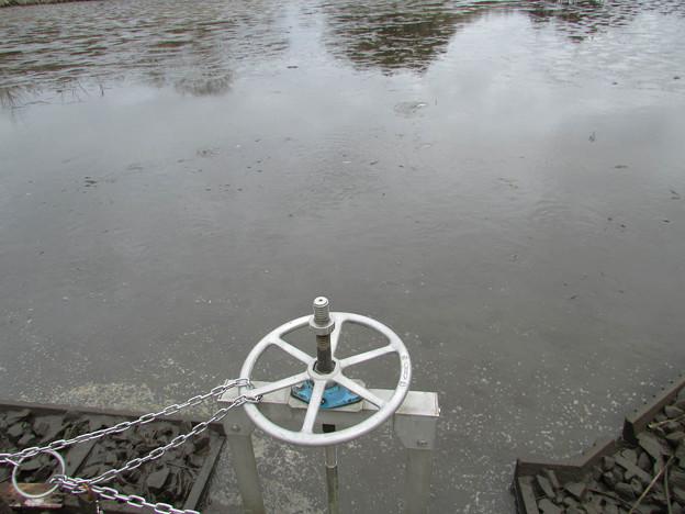 写真: 野池 水抜き