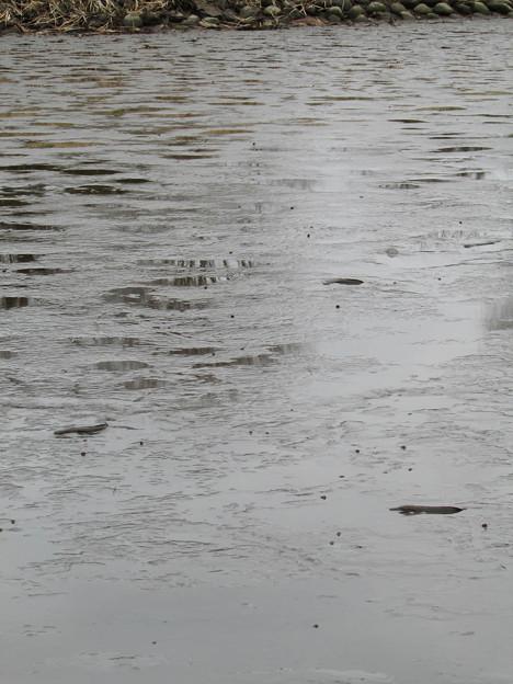野池 水抜き