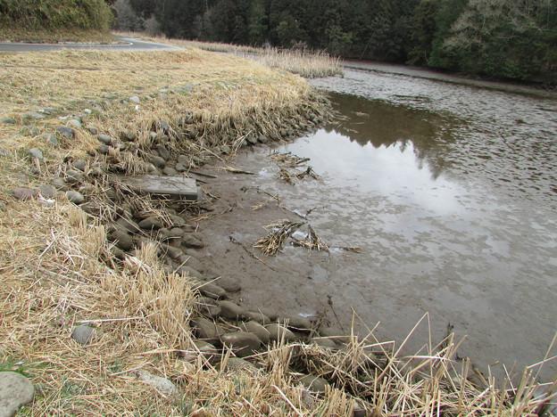 写真: 水抜きされた野池