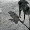 写真: 奈良公園の思い出1
