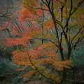 Photos: 紅葉の花貫渓谷