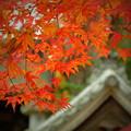 若宮八幡宮の紅葉