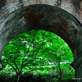 写真: 水路閣・新緑