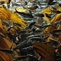 Photos: 20110504_102942