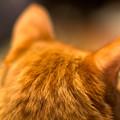 Photos: 飼い猫学園高等部