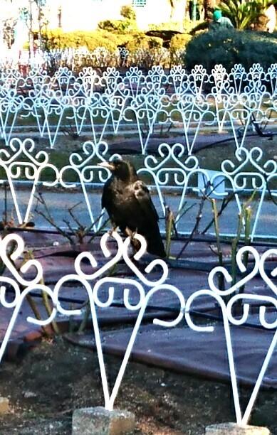 Photos: 鶴舞公園のカラス