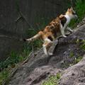 Photos: 猫が行く